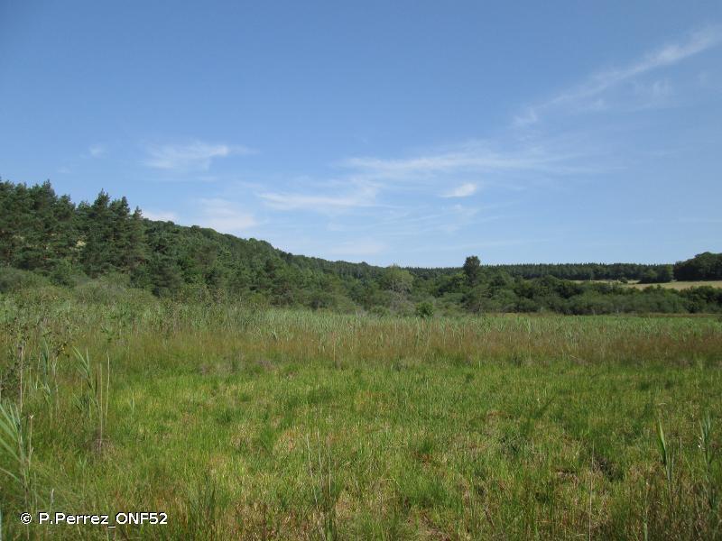 Marais tourbeux du plateau de Langres (secteur Sud-Ouest)