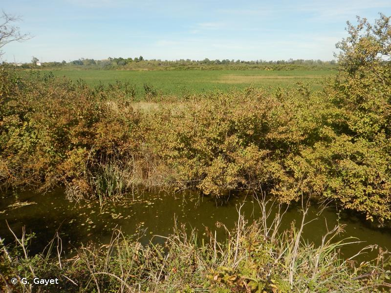 Camargue gardoise fluvio-lacustre