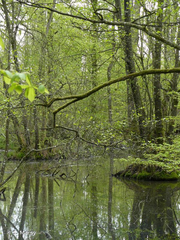 Complexe de l'étang de Lindre, forêt de Romersberg et zones voisines