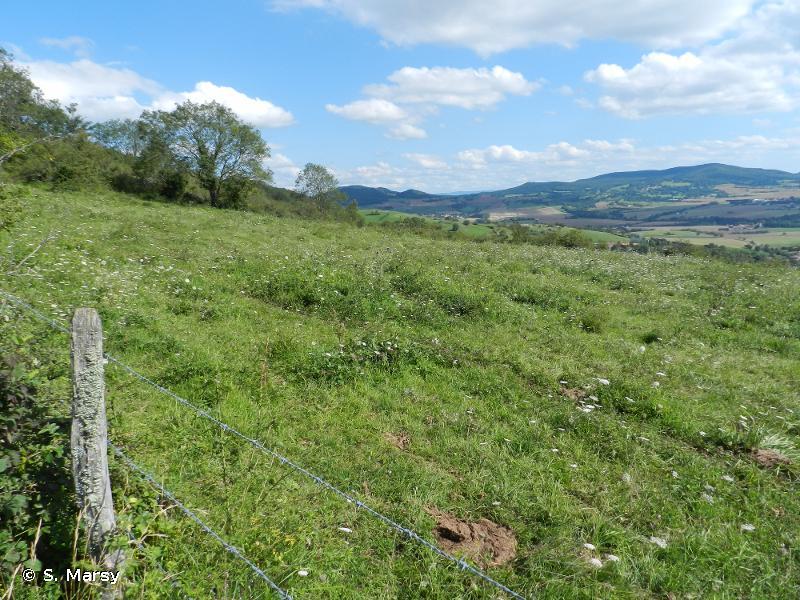 Comté d'Auvergne et Puy Saint Romain