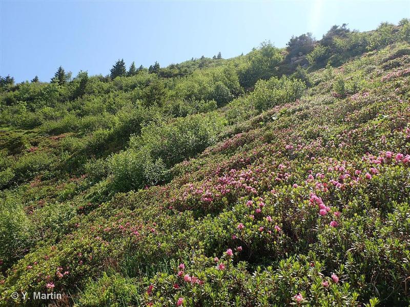 31.4 - Landes alpines et boréales - CORINE biotopes