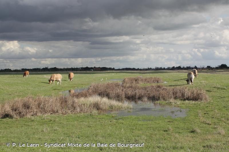 Marais Breton, baie de Bourgneuf, île de Noirmoutier et forêt de Monts