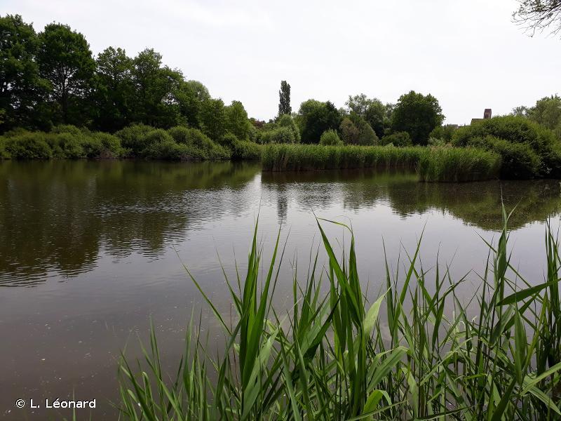 Marais des basses vallées de la Juine et de l'Essonne