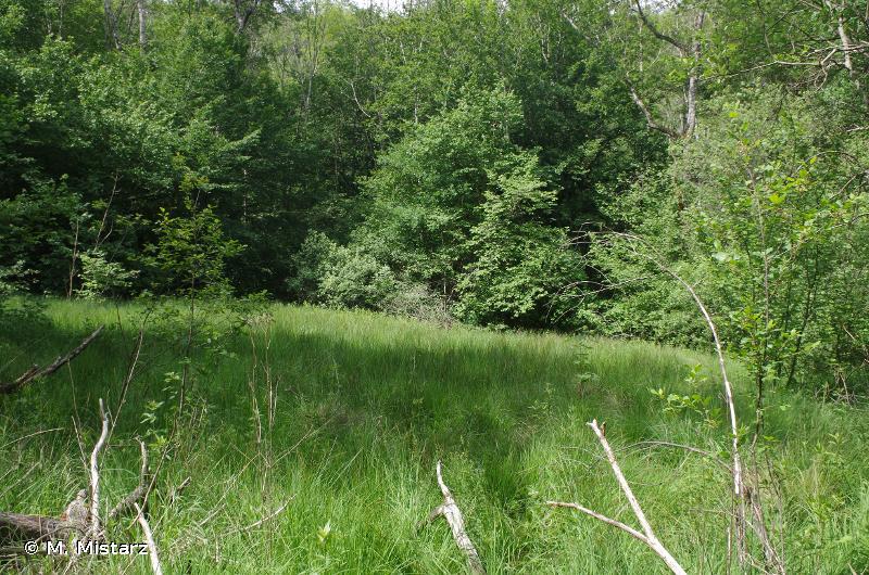 Milieux forestiers du Châtillonnais avec marais tufeux et sites à sabot de Vénus