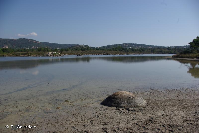 A2.5 - Marais salés côtiers et roselières salines - EUNIS