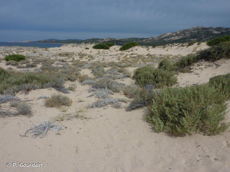 B1.6 - Fruticées des dunes côtières - EUNIS