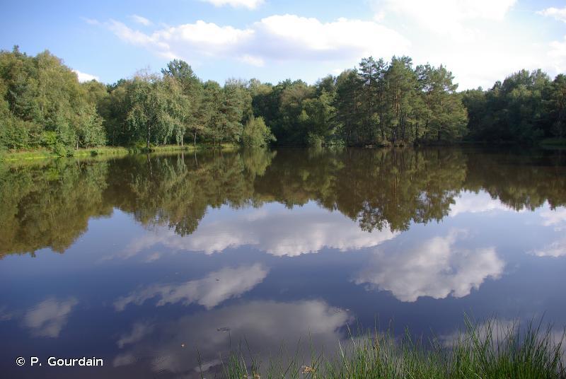 C1.2 - Lacs, étangs et mares mésotrophes permanents - EUNIS