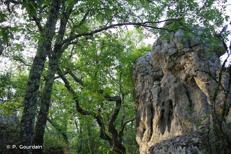 Bois de Païolive, gorges du Chassezac