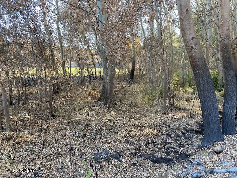 H5.5 - Zones incendiées avec peu ou pas de végétation - EUNIS