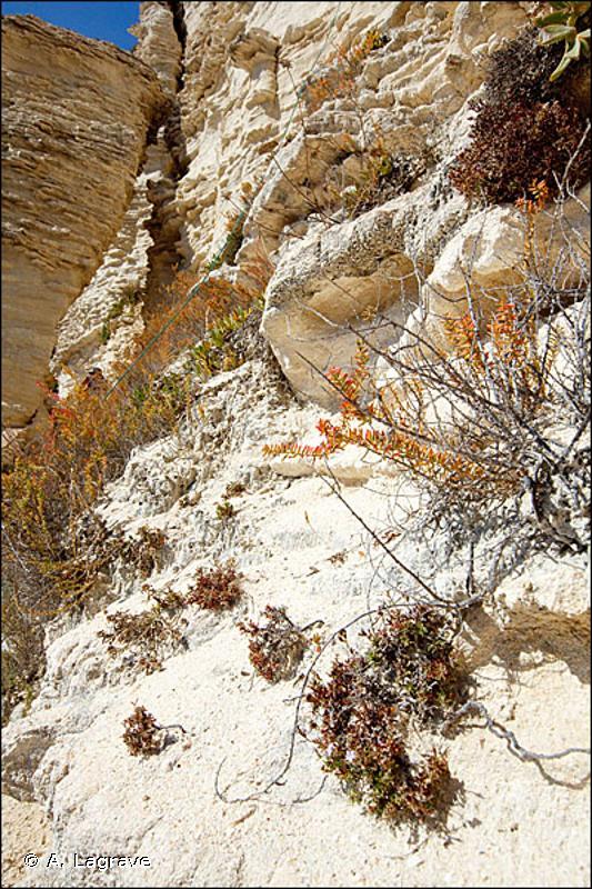 18.2 - Côtes rocheuses et falaises avec végétation - CORINE biotopes