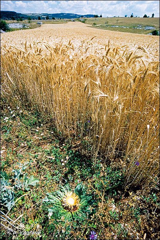 82 - Cultures - CORINE biotopes