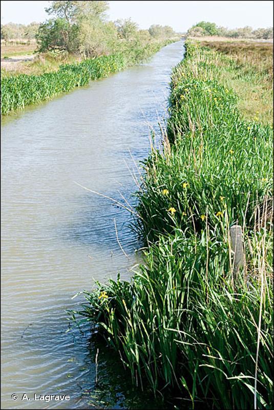 89.2 - Lagunes industrielles et canaux d'eau douce - CORINE biotopes