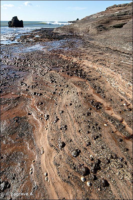 1170-11 - La roche médiolittorale supérieure (Méditerranée) - Cahiers d'habitats