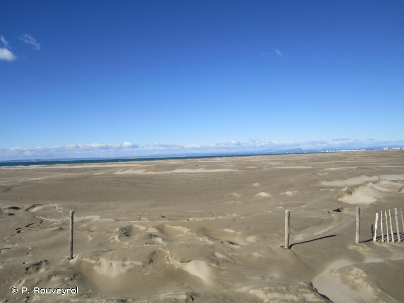 2110-2 - Dunes mobiles embryonnaires méditerranéennes - Cahiers d'habitats