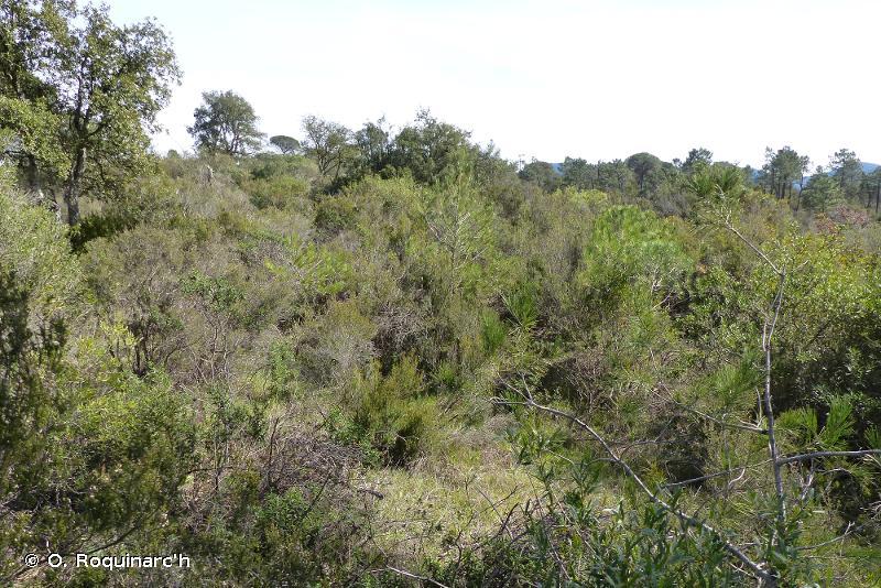 32.3 - Maquis silicicoles méso-méditerranéens - CORINE biotopes