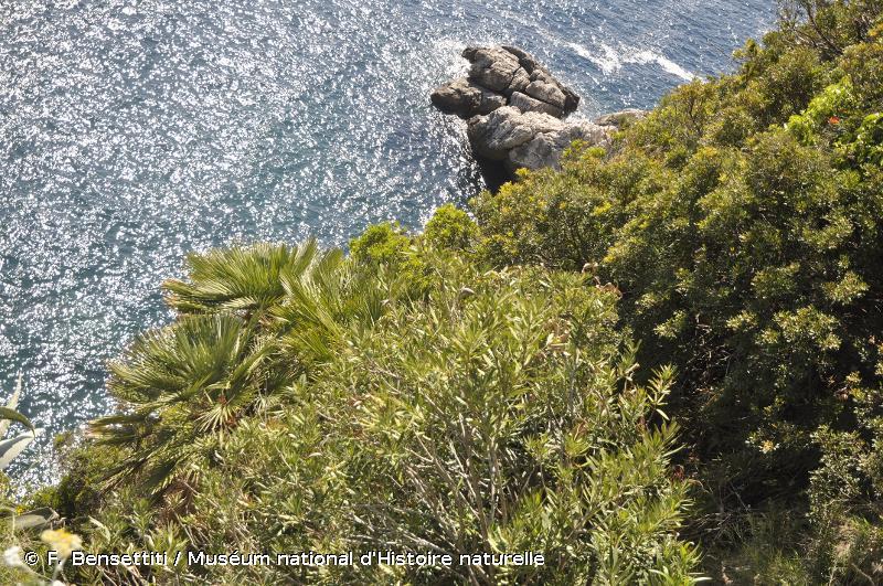 5330 - Fourrés thermo-méditerranéens et prédésertiques - Cahiers d'habitats