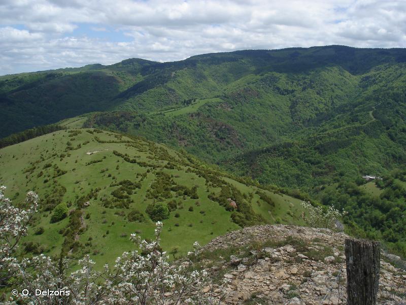 Vallée du Tarnon