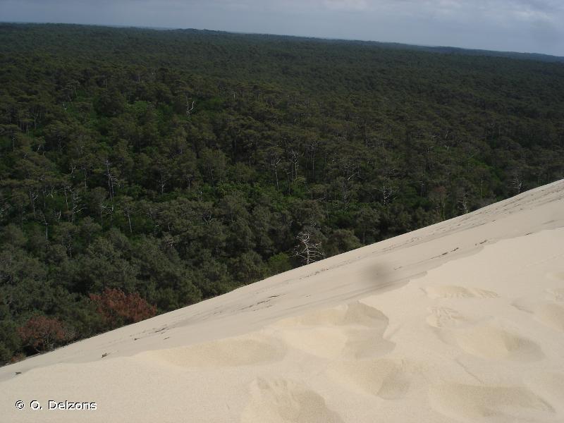 Forêts dunaires de la Teste-de-Buch