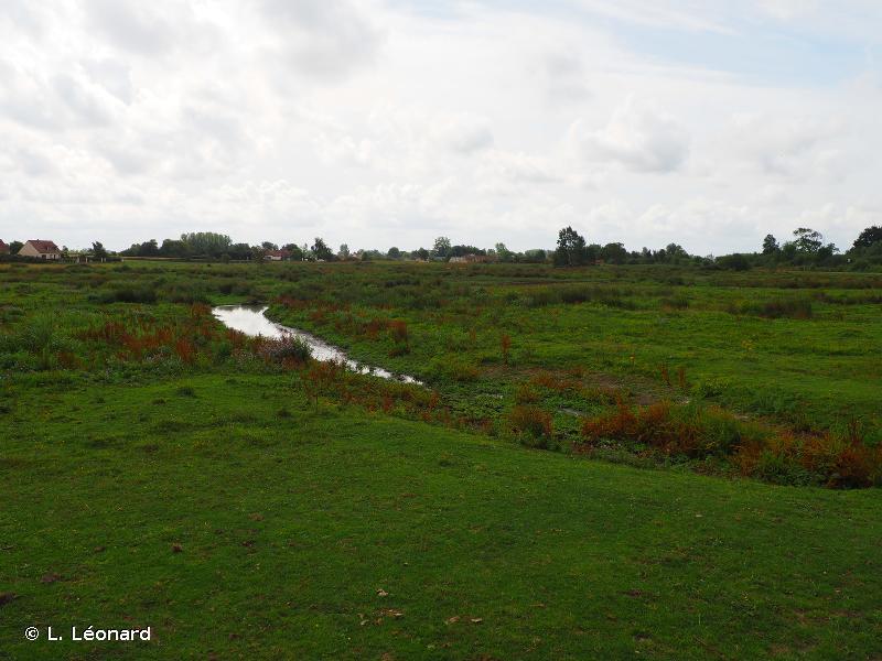 Marais arrière-littoraux picards
