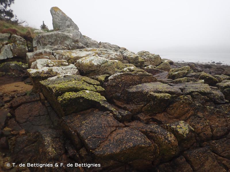 B3.11 - Lichens ou petites algues vertes sur roche du supralittoral et de la frange littorale - EUNIS