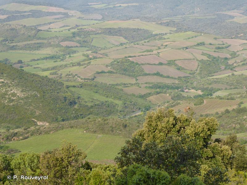 Corbières orientales