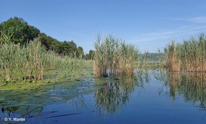 Réseau de zones humides, pelouses, landes et falaises de l'avant-pays savoyard