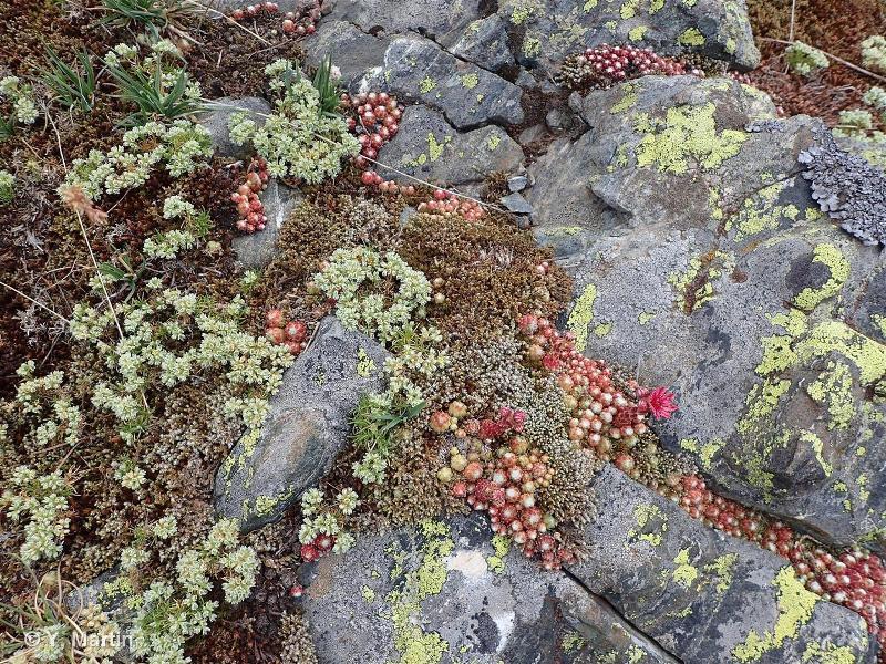 H3.6 - Affleurements et rochers érodés - EUNIS