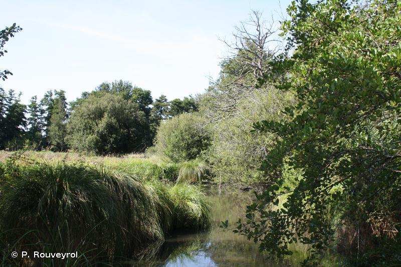 Marais De Bruges