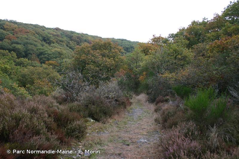 Vallée du Rutin, coteau de Chaumiton, étang de Saosnes et forêt de Perseigne