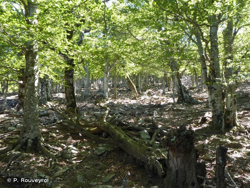 Forêt De La Massane