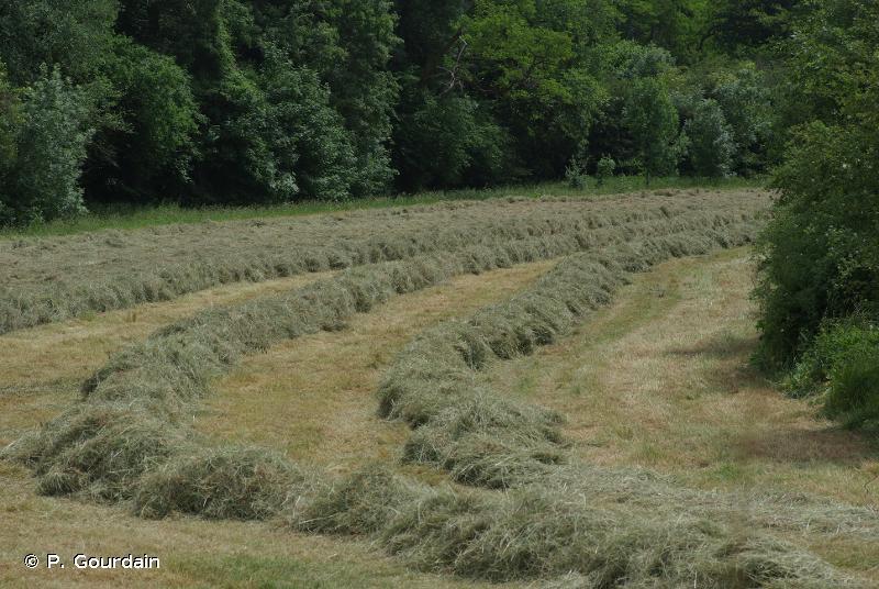 38.2 - Prairies de fauche de basse altitude - CORINE biotopes