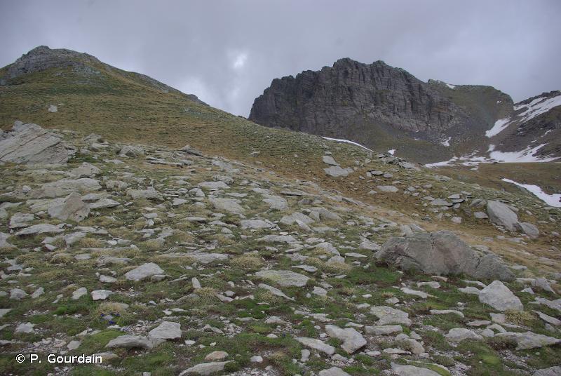 E4.3 - Pelouses alpines et subalpines acidiphiles - EUNIS