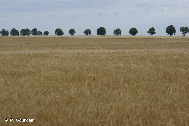 8 - Terres agricoles et paysages artificiels - CORINE biotopes