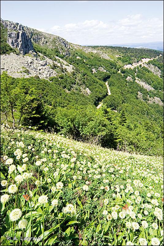4030 - Landes sèches européennes - Habitats d'intérêt communautaire