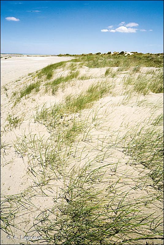 B1.3 - Dunes côtières mobiles - EUNIS