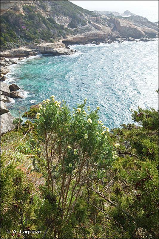 2250 - Dunes littorales à <em>Juniperus</em> spp. - Habitats d'intérêt communautaire