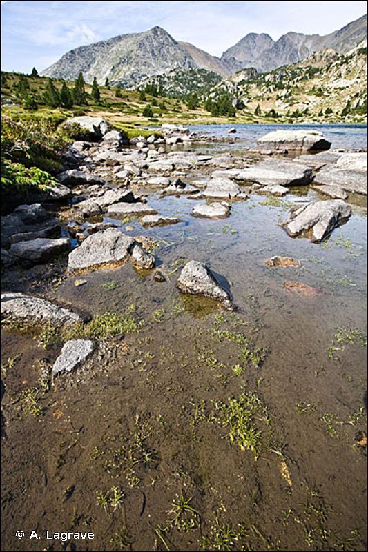 3130-1 - Eaux stagnantes à végétation vivace oligotrophique à mésotrophique montagnarde à subalpine des régions alpines, des <em>Littorelletea uniflorae</em> - Cahiers d'habitats