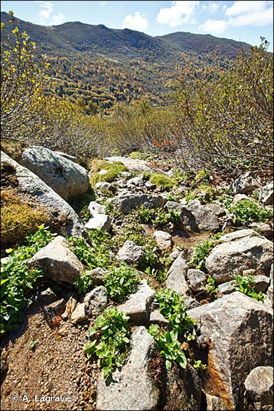24.2 - Bancs de graviers des cours d'eau - CORINE biotopes