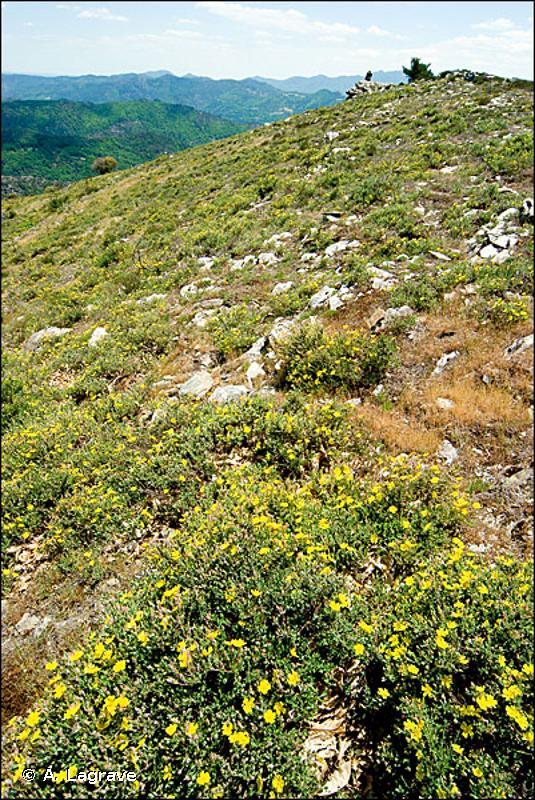 F4.2412 - Landes arides de Gascogne et de Sologne - EUNIS