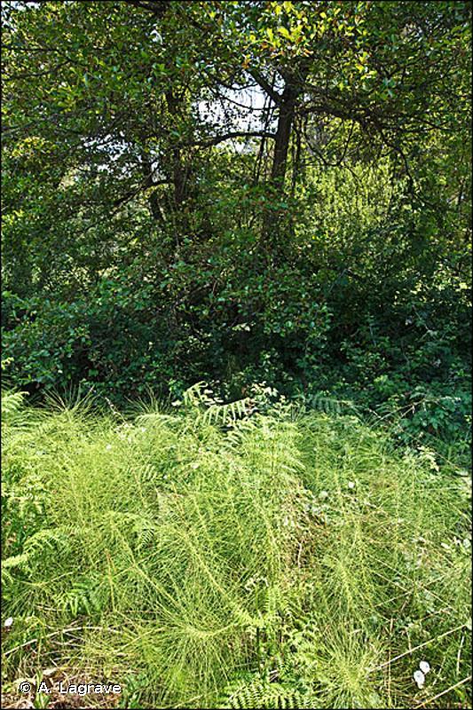 44 - Forêts riveraines, forêts et fourrés très humides - CORINE biotopes