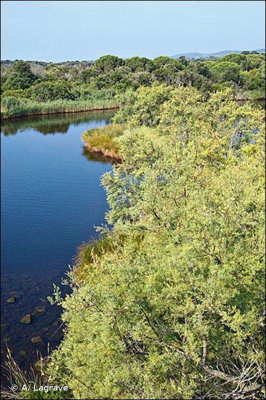 92D0-3 - Galeries riveraines à Tamaris - Cahiers d'habitats