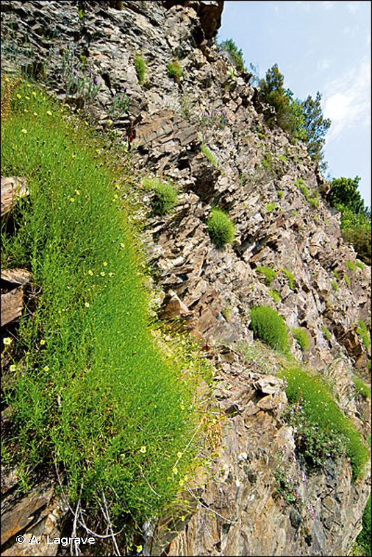 8210-3 - Falaises de la bordure méridionale des Cévennes - Cahiers d'habitats