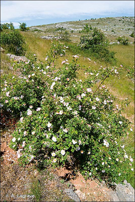 87.1 - Terrains en friche - CORINE biotopes