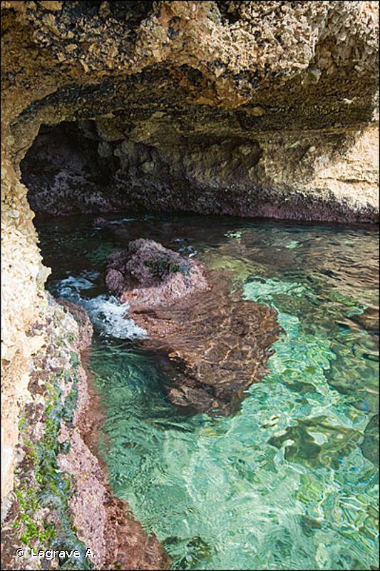 A1.44 - Biocénoses des grottes et surplombs intertidaux - EUNIS
