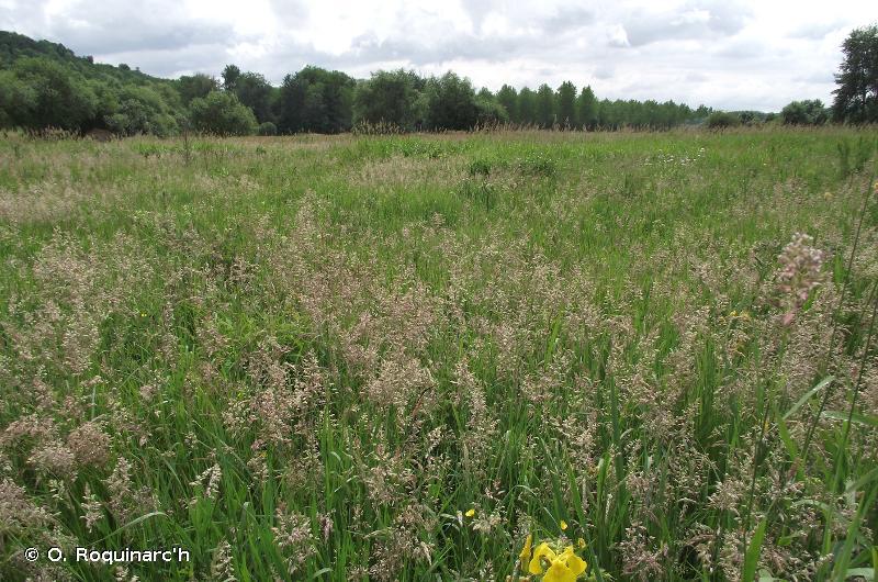 37 - Prairies humides et mégaphorbiaies - CORINE biotopes
