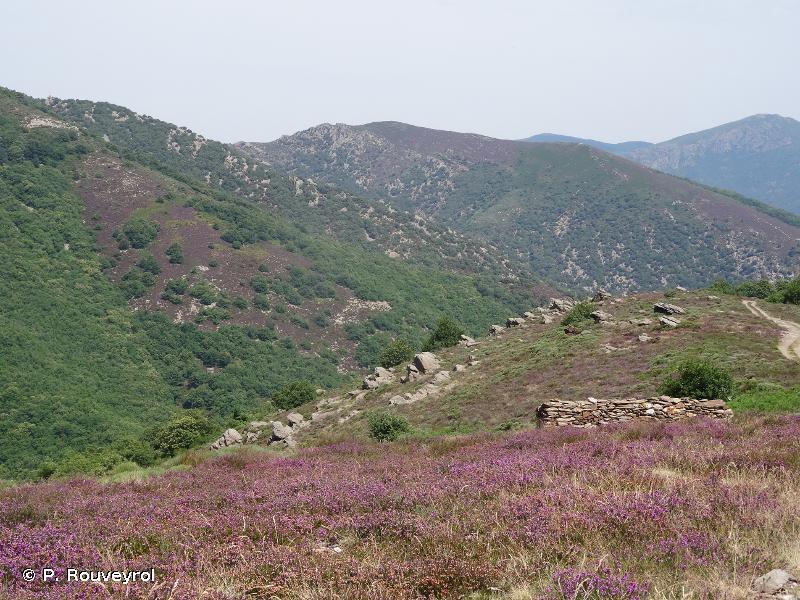Haut-Languedoc