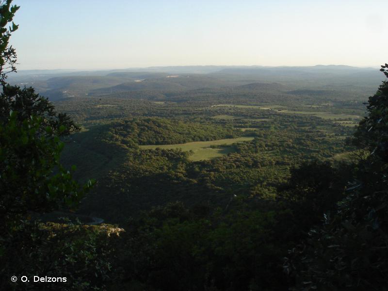 Garrigues boisées du nord-ouest du Montpelliérais
