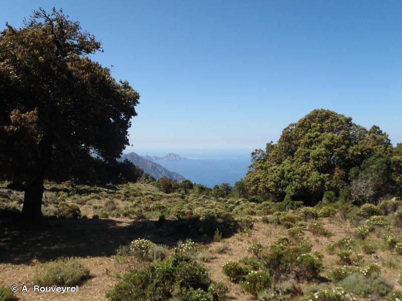 Porto/Scandola/Revellata/Calvi/Calanches de Piana (zone terrestre et marine)