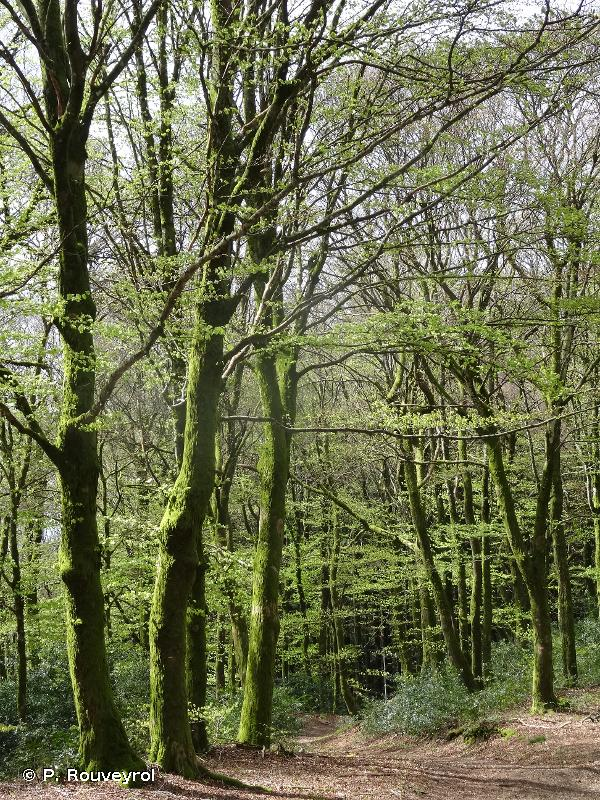 Massif forestier du Mont Beuvray