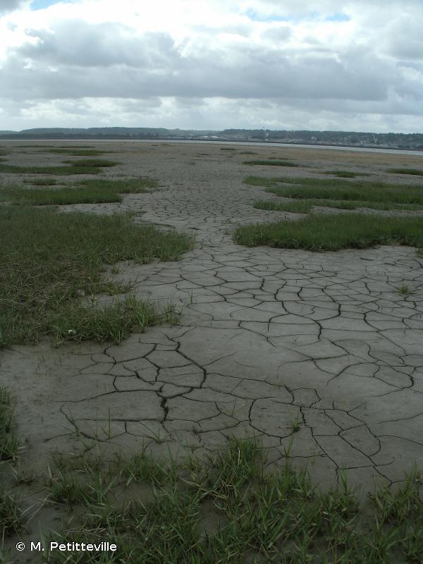 Estuaire et marais de la Basse Seine